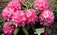 ARHS Plant Sales